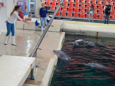Training dolphins with food