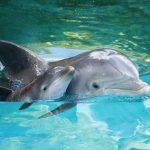 бебе делфин с майка си