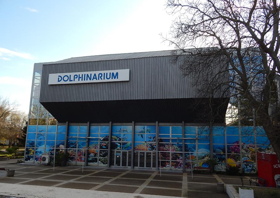 Festa Dolphinarium