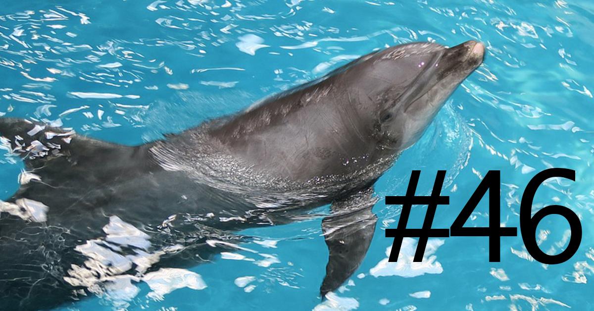 dead baby dolphin